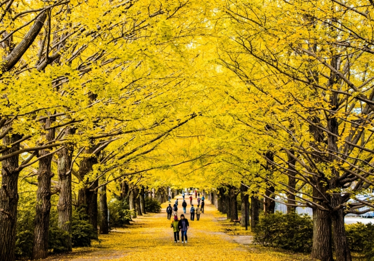 Tuyển chọn 5 địa điểm ngắm lá đỏ ở Tokyo