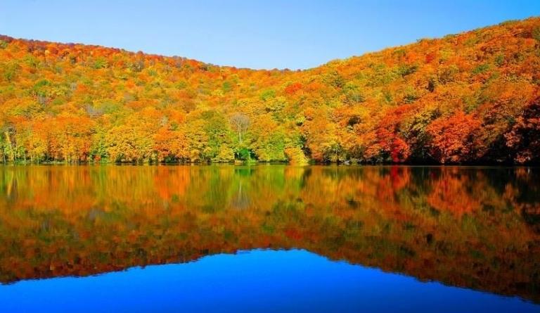 Khi mùa lá vàng trang hoàng cả mùa Thu Nhật Bản