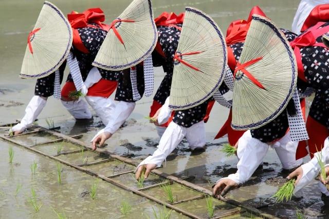 """Lễ hội Nhật Bản – """"Lễ hội cấy lúa"""" đầu tháng 6 ở Hiroshima – Kagoshima – Osaka"""