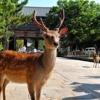 Di sản thế giới của Nhật Bản – Những di sản văn hóa ở cố đô Nara