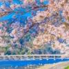 【Kyoto】 Top 10 điểm tham quan nên đi ở khu vực Arashiyama/Sagano